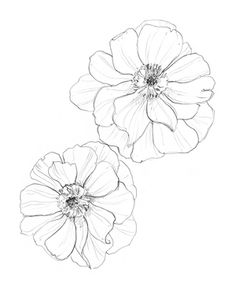 anemone by erin ellis