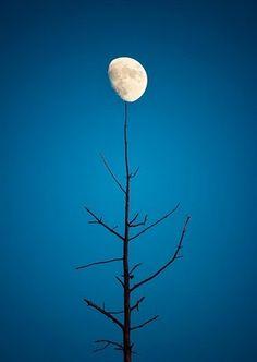 balancing moon