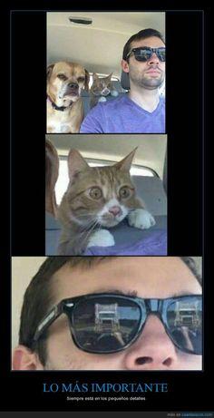 ¿Por qué está tan asustado el gato?  - Siempre está en los pequeños detalles