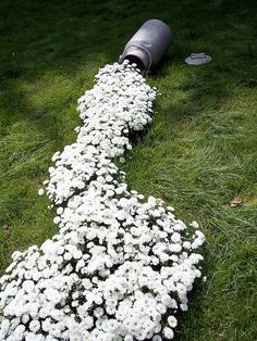 Could we use this as a dry bed with flowers on the parts of the lawn that water flows...different kind of flower needed...
