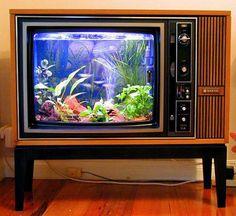el viejo televisor en acuario