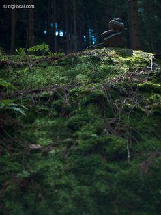 Forest zen  Czech Switzerland, Czech Republic