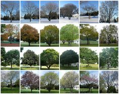 take pictures of the same tree throughout the year to study seasons