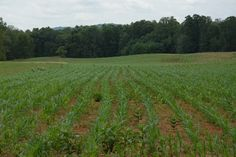 Spring Corn Planting...