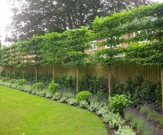 Pleached trees provide screening and privacy Formal Garden Design, Small Garden Design, Formal Gardens, Outdoor Gardens, Outdoor Trees, Outdoor Structures, Amazing Gardens, Beautiful Gardens, Garden Screening