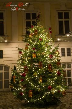 Christmas tree hidden in a secret Palais in Vienna, Austria Christmas Lights, Christmas Tree, Vienna Austria, Live For Yourself, Dreaming Of You, World, Holiday Decor, Home Decor, Christmas Fairy Lights