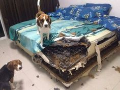 We fixed the bed.  What, you don't like it?  Oops.
