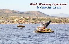 Whale Watching Experience in Cabo San Lucas  #whale #whalewatching #cabosanlucas #yachtscabo #yachtcharters