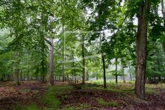 Mai-Regen im Laubwald - Wald, Laubwald, Regen, Bäume, Laub, Frühling, Naturfotografie  http://ronni-shop.fineartprint.de