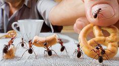 Dobré rady pre domácnosť: Na mravce v byte zaberie cukor, droždie a voda