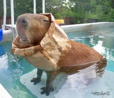 An Ode to the Capybara, via Pleated Jeans #Capybara #pets