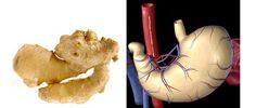 Alimentos que se parecem com órgãos do nosso corpo são benéficos exatamente para estas partes. Entenda melhor quando a semelhança, não é mera coincidência: