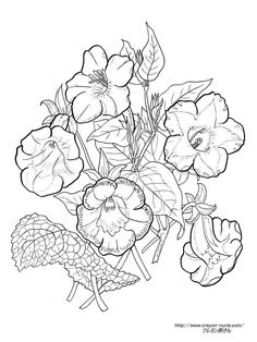 1000 Images About Artsy Coloring On Pinterest Dover Artsy Coloring Pages