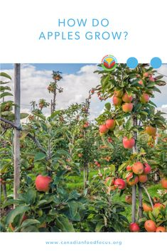 When it comes to getting that apple ready for you, there is a pile of work that goes into making the best apple possible. Barley Recipes, Bison Recipes, Oats Recipes, No Dairy Recipes, Mushroom Recipes, Fruit Recipes, Egg Recipes, Pork Recipes, Chickpea Recipes