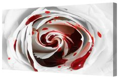 Canvart premium #canvasprint Blood Rose Macro Giclee Gallery Wrap Canvas. Buy now at http://canvart.co.uk/blood-rose-macro-giclee-gallery-wrap-canvas.html