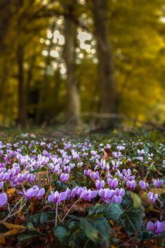 nature's carpet
