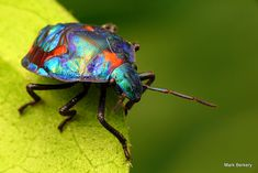 BRIGHTLY COLOURED - Google Search