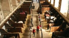 Grand Stables in Chantilly, France