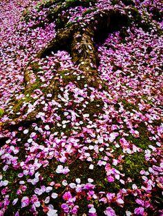 #Primavera   Spring #Lizarran