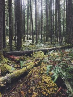 "justapplyyourself: ""Fish Creek Trail. Three Lynx, Oregon. """