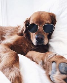 8efa6e702e3 Here are six ways you can chill with your dog and get the most… - dog tmb