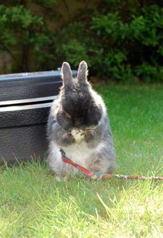 Bunny stifles a giggle - June 17, 2012