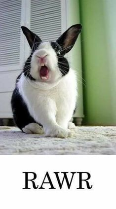 Rabbit ready for battle Animals And Pets, Baby Animals, Funny Animals, Cute Animals, Rabbit Life, Pet Rabbit, Cute Baby Bunnies, Funny Bunnies, Bunny Quotes