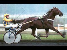 Mon cheval me dit: L'histoire extraordinaire du roi Ourasi