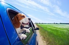 Tips for planning a road trip with your dog