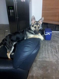 What do you mean this is your chair?