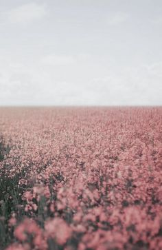 fields of rose quartz with serenity skies