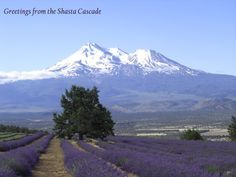 The Shasta Cascade region of Northern California includes 12 districts: Yreka/Klamath River; Mt. Shasta/McCloud; Red Bluff/Tehama; Redding/Shasta Lake; Burney/Eastern Shasta; Chico/Paradise; Oroville/Lake Oroville; Alturas/Modoc; Susanville/Lassen; Chester/Lake Almanor; Quincy/Feather River - and some of the most beautiful and diverse scenery in the world!