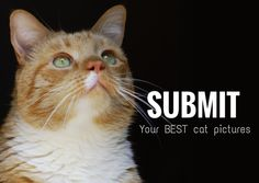 Submit your Cat Picture!!!  HIGH RESOLUTION PICTURES ONLY: http://catbreedswithpictures.com/submit-pic/