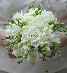 Sweet white freesia make for a beautiful bouquet! Freesia are fragrant and provide wonderful color. Shop freesia in a variety of eye-catching colors a. Freesia Wedding Bouquet, Freesia Flowers, White Wedding Bouquets, Bride Bouquets, Floral Wedding, White Tulip Bouquet, Orchid Bridal Bouquets, Cascade Bouquet, Bridesmaid Bouquets