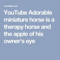 YouTube Adorable miniature horse is a therapy horse and the apple of his owner's eye