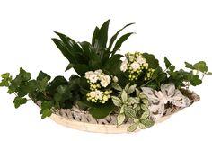 Afbeeldingsresultaat voor plantenstuk