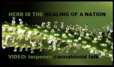 #terpenes #cannabinoid #cannabis #marijuana #420