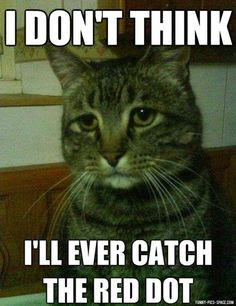 DEPRESSED CAT Funniest Memes (7 IMAGES) #memes