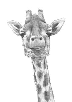 giraffe black and white wallpaper - Google Search