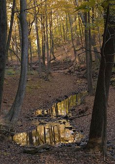all quiet in the woods - Watchung Reservation, Union County, New Jersey