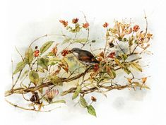 Lovely Bird Illustrations by Marjolein Bastin | Cuded