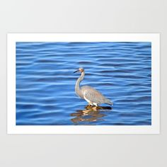 bird, heron, nature