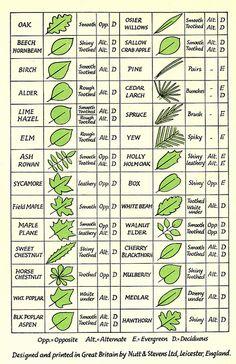 wixxa:  Leaf Chart