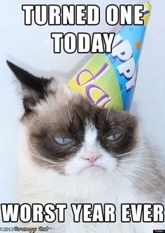 grumpy cat's birthday | And was suitably unimpressed with her birthday cake: