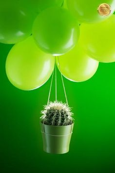 Title: Cactus And Baloons | Category: Conceptual | Country: Italy