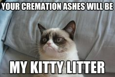 New funny memes sarcastic hilarious humor grumpy cat ideas Grumpy Cat Quotes, Funny Grumpy Cat Memes, Grumpy Kitty, Angry Cat Memes, Grumpy Cat Good, Grumpy Cat Cartoon, Grumpy Cat Images, Grumpy Baby, Cat Jokes
