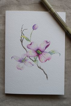 Pink Dogwood 2 Watercolor Painted Card Original by SunsetPeonies