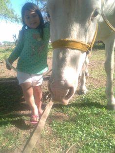Horses, Animals, Health, Animales, Animaux, Animal, Animais, Horse