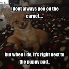 I dont always pee on the carpetbut when I do Its right next to the puppy pad