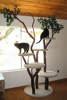 News From the Holmestead: BEAUTIFUL CAT TREES